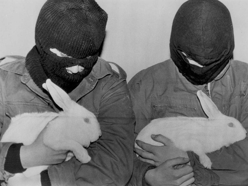 Fla Frente De Liberación Animal Cultura Vegana